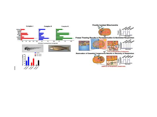 A novel approach to measure mitochondrial respiration in frozen biological samples