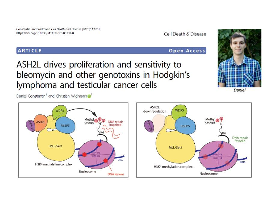 ASH2L drives proliferation and sensitivity to bleomycin and other genotoxins in Hodgkin's lymphoma and testicular cancer cells