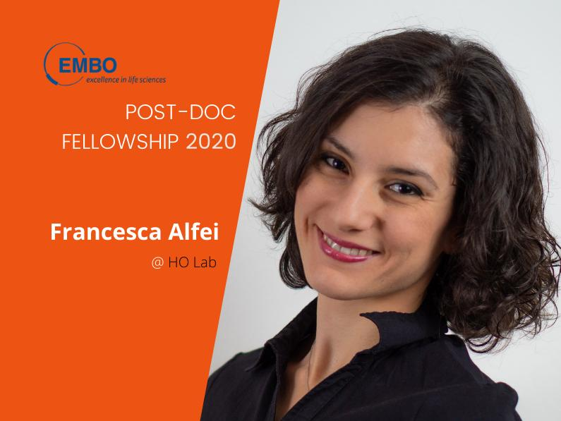 An EMBO 2020 post-doctoral fellowship to Francesca Alfei/Ho Lab