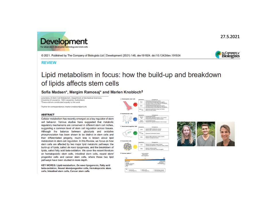 Lipid metabolism in focus: how the build-up and breakdown of lipids affects stem cells
