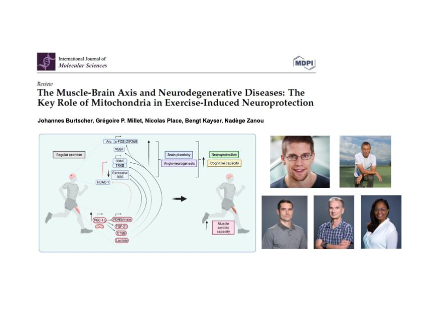 The Muscle-Brain Axis and Neurodegenerative Diseases: The Key Role of Mitochondria in Exercise-Induced Neuroprotection